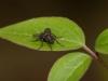 fly_on_leaf