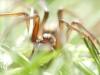 garden_spider_in_grass