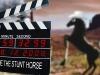 Work On The Wild Side - Stunt Horse 1