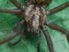 house_spider01