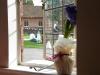 flower arrangement by window