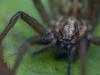 house_spider02